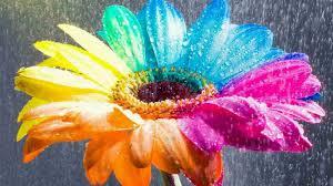 flowers rwe